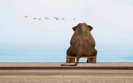 elefante-sentad-banco